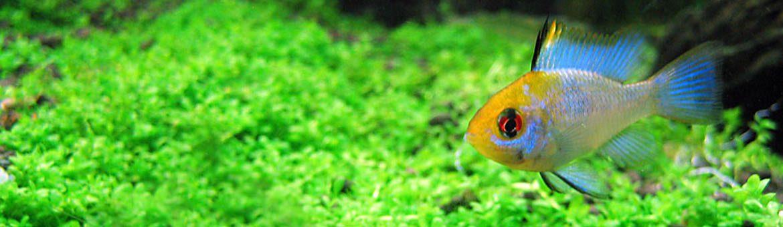 Peces aquazen for Variedad de peces
