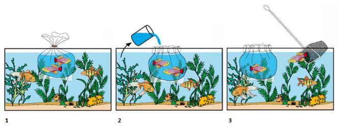 Preguntas frecuentes aquazen for Comida viva para peces