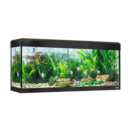 Acuario Fluval Roma 240 led bluetooth nogal